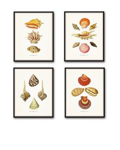 """Vintage French Seashell Print Set - Giclee Fine Art Prints - Unframed. This set of 4 charming shell prints has been created from restored Vintage French Seashell illustrations The images have been digitally enhanced and added to a light neutral background. • Free Shipping • Money Back Guarantee • Sizes Available: 5x7, 8x10, 11x14 • Trimmed to size for easy framing. • Sized to fit """"off the shelf"""" standard retail frames & mats. • Printed on Professional Archival Paper using Archival Inks •..."""