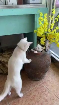 Follow us for more videos #cat #cutecat #kitty #kittens #funnycat Funny Cute Cats, Cute Baby Cats, Cute Little Animals, Cute Cats And Kittens, Cute Funny Animals, Kittens Cutest, Cats Doing Funny Things, Cute Animal Videos, Funny Animal Pictures