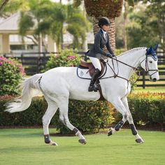 Dover Saddlery is your source for horse tack, horse supplies and riding apparel -- everything an English rider needs. Dover Saddlery, Equestrian Outfits, Equestrian Fashion, English Riding, Show Jumping, Horse Photography, Horse Girl, Horse Tack, Show Horses