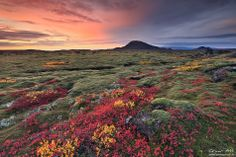 Colors of fall. Reykjanes peninsula SW-Iceland Photo by Örvar Þorgeirsson