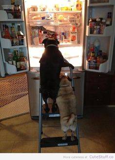 Little pugs have found the promised land