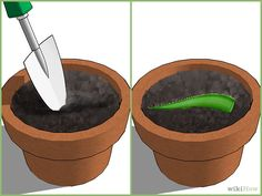 How to Grow an Aloe Plant With Just an Aloe Leaf. Growing Aloe Vera is easy. Planting it is a little trickier. Unlike other succulents and cacti, it is difficult to grow Aloe Vera from just a leaf. The chances of the leaf actually taking. Plantar Aloe Vera, Garden Plants, Indoor Plants, Growing Aloe Vera, Aloe Leaf, Cactus Y Suculentas, Growing Herbs, Plantation, Cacti And Succulents
