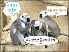 원숭이해_현실적인명언10가지09