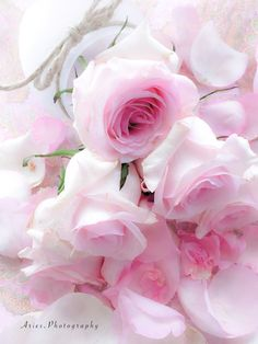 P I N K - Pink Rose Flower, Beautiful Gif, Plants, Pictures, Flowers, Nature, Photos, Plant, Grimm