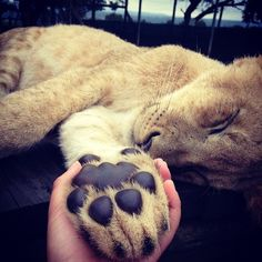 Look at the size of those paws