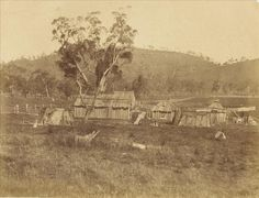 Early photographs - Indigenous Victorians Aboriginals' farm near Mount Franklin. This image was taken by Antoine Fauchery and Richard Daintree between late 1857 and early 1859 for inclusion in their Photographic Series Sun Pictures of Victoria.