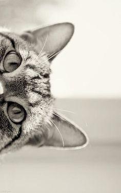 hello #cat
