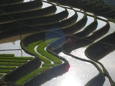 The Incredible Terraces of Yuanyang Kunming, China  - by Chiara Basso  - http://www.minube.co.uk/photos/place/457161/45513