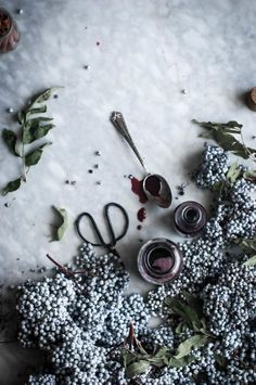 Foraging for Elderberries Elderberry Syrup - The Kitchen McCabe