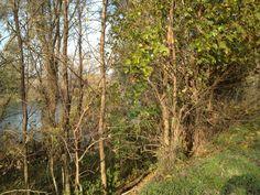 Controluce fiume adige bassa veronese pinterest for Piani di casa di campagna 1500 sq ft