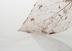 Mended Leaf by Jenine Shereos of found leaf and human hair - photo by Robert Diamante