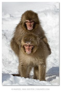 Monkey - nice picture