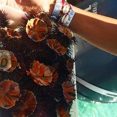 "vandazzz on Instagram: ""I #sealife #friendship #bracelet #details #beachbound #id 〰〰〰 #tb #summer #greece #onboard #salty everything! Bracelet available www.vandazzz.com"" Greece, Friendship, Instagram, Bracelets, Summer, Greece Country, Summer Time, Bracelet, Arm Bracelets"