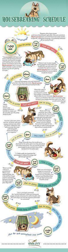 Dog Care Tips.. Sam Ivy K9's Housebreaking Schedule #puppypottytrainingschedule #puppytrainingdiy #DogHealth