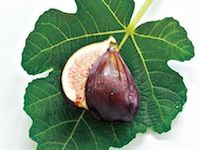 Fig Tree, Savor the sun-warmed sweetness of fresh fig. Juicy, earthy and incredibly flavorful. www.partylite.biz/ambercory #candles #partylite #tealights #votives #scentplusmelts #escentialjar #smartscents #3wickjar