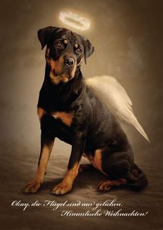 "Click visit site and Check out Best ""Rottweiler"" T-shirts. This website is top-notch. Tip: You can search ""your name"" or ""your favorite shirts"" at search bar on the top."