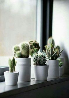 Windowsill decoration - 57 ideas how to discover the potential of the windowsill - window sill decoration cactus plants houseplants -