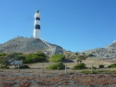 Cape Campbell, day trip from The Beach House Rarangi