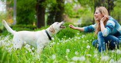 Welche Hunderasse spiegelt Ihre Persönlichkeit wider?