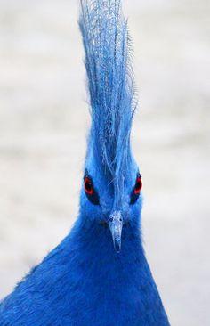 Cool #bird#Bird #Photography