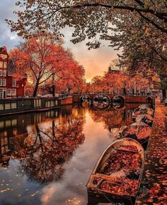 Fall Images, Fall Pictures, Autumn Cozy, Autumn Forest, Autumn Fall, Autumn Nature, Autumn Leaves, Autumn Scenes, Autumn Aesthetic