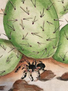 My tarantula!