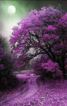 Beautiful tree in purple Beautiful Scenery, Beautiful Landscapes, Beautiful World, Beautiful Flowers, Beautiful Places, Stunningly Beautiful, Natural Scenery, Beautiful Smile, Wonderful Places