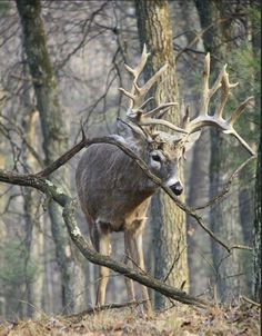 How To Get Started With Salt Water Fishing Big Whitetail Bucks, Whitetail Hunting, Deer Hunting, Whitetail Deer Pictures, Deer Photos, Deer Pics, Big Deer, Rare Animals, Strange Animals