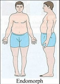 2981ac4d6d Typical Endomorph Calorie Cycling, Types Of Humans, Lose Body Fat, Gain  Muscle,