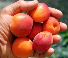 Αγροτικές Ειδήσεις: Δικαιολογητικά που θα πρέπει να προσκομίσουν οι παραγωγοί ροδάκινων και νεκταρινιών