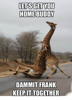 Funny Giraffe...it's ok.  Everyone has been dragged home a time or too!  Haha