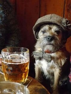 'You've got to have some fun on a Saturday Night!' - Border Terrier down at the Pub