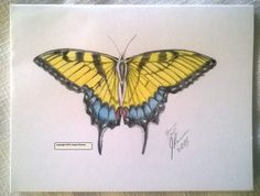 Butterflies by J. Renner Set of 5 Individually Handcolored/Hand Signed Blank Notecards w/Envelopes Boxed-Free US Shipping - pinned by pin4etsy.com