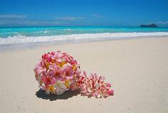 flor plumeria - Buscar con Google