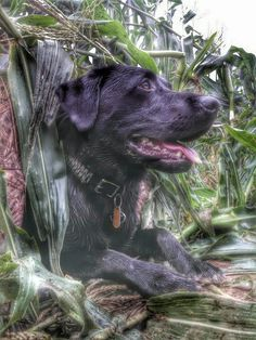 1000+ images about Pets on Pinterest | Ducks unlimited ...
