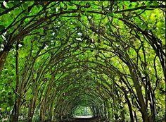 イギリス多赛特、クライスト・チャーチ修道院、緑のトンネル 這段は天然の通路への「イギリス最低評価の修道院」が、とてもきれいで。