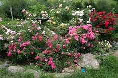 Gardening:Rose Garden Tips And Ideas Gardening Landscape Plans Garden Seating Planting Plan Climbing Rose Flower Yard Decor Small Backyard Landscaping Layout Design Ideas (33) Rose Garden Tips and Plans Ideas : How to Grow a Rose Garden in Pots and Other Flower Container