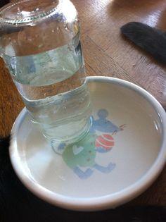 Kissojen juoma-astia