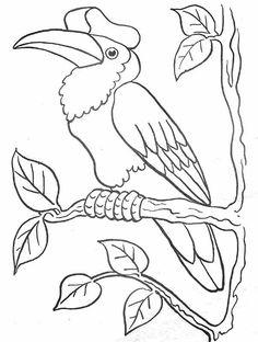 img/dessins pour les enfants/oiseau-casoar.JPG
