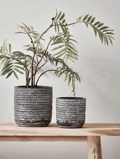 Rooms Indoor Planters, Large Decorative Indoor Plant Pots, Indoor Flower Pots UK What Organic Really Large Ceramic Planters, Large Plant Pots, Rustic Planters, Ceramic Plant Pots, Ceramic Flower Pots, Indoor Flower Pots, Indoor Plant Pots, Potted Plants, Large Indoor Planters