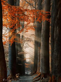 The Poetry of Nature - Photos Curated by Lars van de Goor & Beautiful World, Beautiful Places, Beautiful Pictures, October Country, Magic Forest, Photos Voyages, Amazing Nature, Belle Photo, Nature Photos