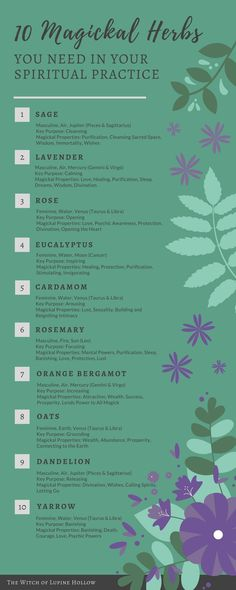 10 Magickal Herbs You Need In Your Practice - essential herbs and flowers for witchcraft - sage, lavender, rose, eucalyptus, cardamom, rosemary, orange bergamot, oats, dandelion, yarrow