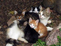 (101) I Love CATS - Photos de I Love CATS