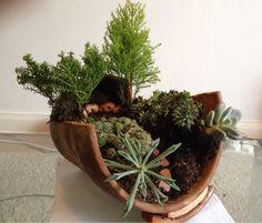 Broke a pot, made an indoor garden. - Imgur