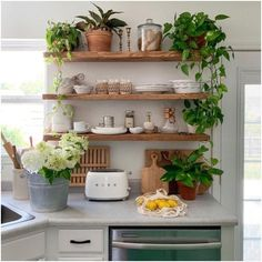 147 small kitchen decor ideas on a budget to maximize existing the space - page 33 ~ Modern House Design Home Decor Kitchen, Kitchen Interior, Home Kitchens, Plants In Kitchen, Country Kitchen, Kitchen Small, Bohemian Kitchen Decor, Earthy Kitchen, Kitchen Pantry