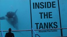 Inside The Tanks Documentary: https://www.youtube.com/watch?v=Hy9gt-f3I6Q&feature=youtu.be #insidethetanks #orca