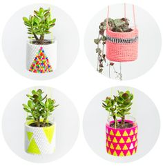 Squeezed Daily-Tropical Living: Plants Hanging Around - Hanging Pots