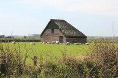 schapenboet op Texel