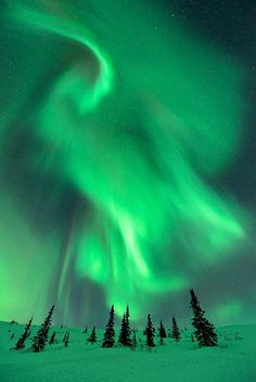 Above The Spruce by Ben  H. on Flickr.Aurora borealis, Alaska