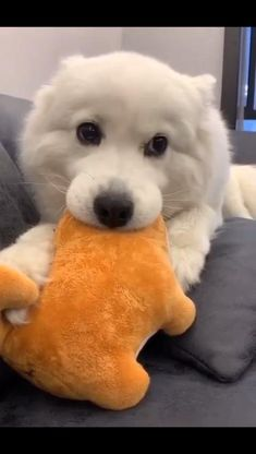 Fluffy cloud wants to play tug Funny Animal Videos, Cute Funny Animals, Cute Baby Animals, Funny Dogs, Funny Memes, Cute Dogs And Puppies, I Love Dogs, Doggies, Pet Life